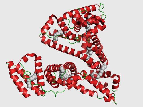 Human Serum Albumin (HSA)